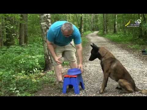 Дрессировка, как научить собаку и щенка, пищевая мотивация обучение и развитие