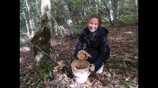 Немного о грибах в Краснодарском крае  Идем в лес за опятами.