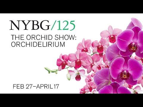 The Orchid Show 2016: Orchidelirium