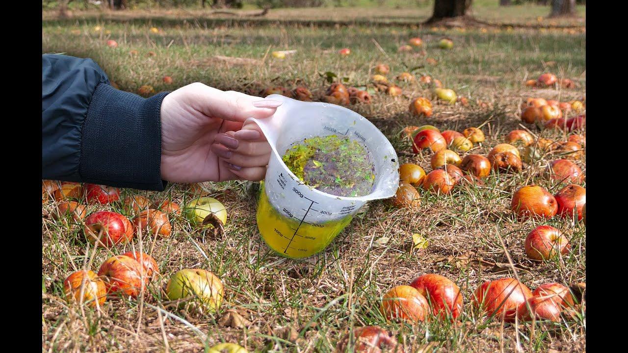 Осенью подливаю это в плодовые деревья, урожай огромный каждый год! Супер подкормка!