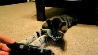 KITTEN PLAYING CRAZY CAT APP