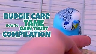 Budgie Care | How to Tame, Gain Trust Compilation