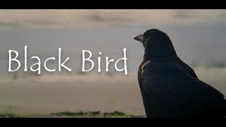 本家様 Black Bird -「hollow world」より トレーラー映像:https://www...