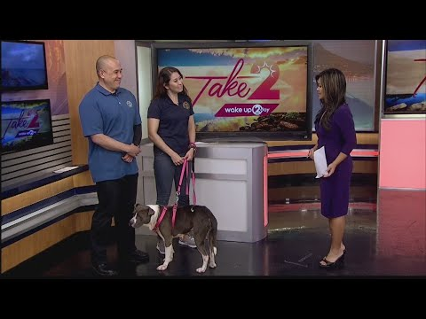 Prevent Animal Cruelty with the Hawaiian Humane Society
