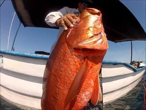 Spearfishing Pargo Baja 2015