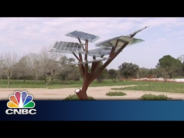 Charging Your Phone With Trees | Sustainable Energy