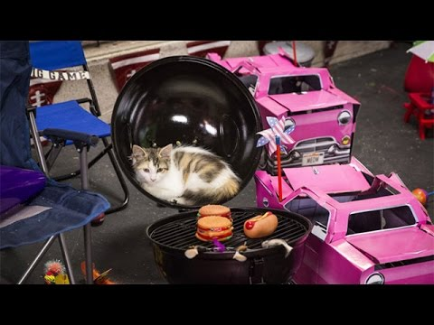 Thumbnail for Cat Video Kitten Bowl II - On Location in the Purrking Lot