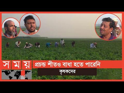 আলু উৎপাদনে বাম্পার ফলনের আশা কৃষি বিভাগের!   Munshiganj News   Business News   Somoy TV