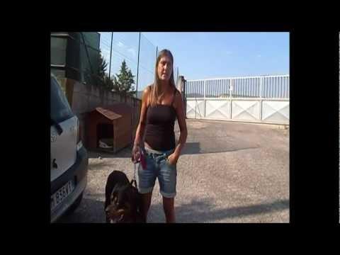 Fresco di Web – Il canile di Ossaia (Cortona) – Intervista alla responsabile