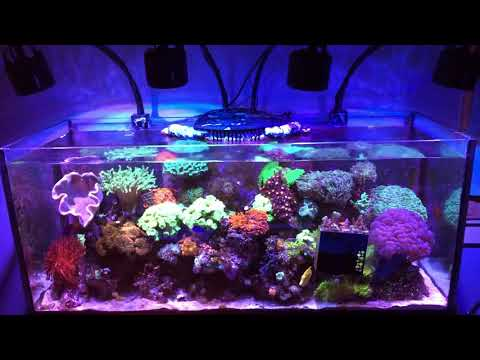 mixed-reef-75gal-january-update