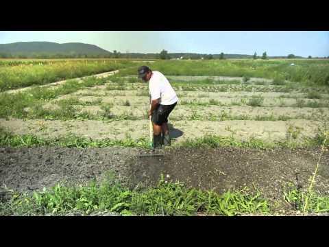 Les Jardins de Marie-Bio, un incubateur agricole sur petite surface