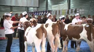 Championnat Meneurs - Montbéliard Prestige Junior 2011