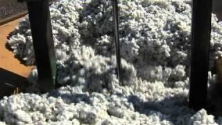 Georgia Peanuts and Cotton Harvest Underway
