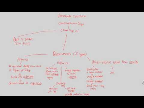 Circulation - Vertebrate Circulation