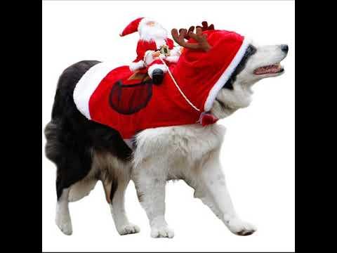 Costume Reine Du Père Noël Pour Chien !!!!!