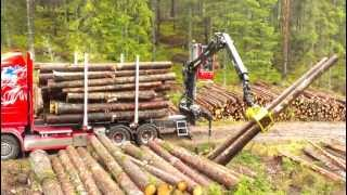 New Scania R560 loading timber
