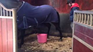 How to potty train your horse !!!
