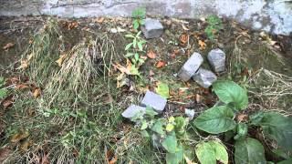 Нападение на Посольство России в Лондоне(Видео-репортаж о нападении сирийских оппозиционеров на Посольство России в Лондоне Сирийские активисты..., 2012-08-20T13:29:25.000Z)
