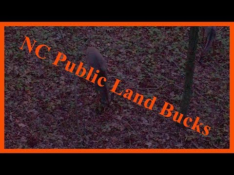 NC Public Land Bucks
