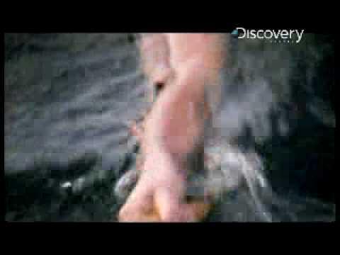 Girl Attacked By Shark! | Shark Week