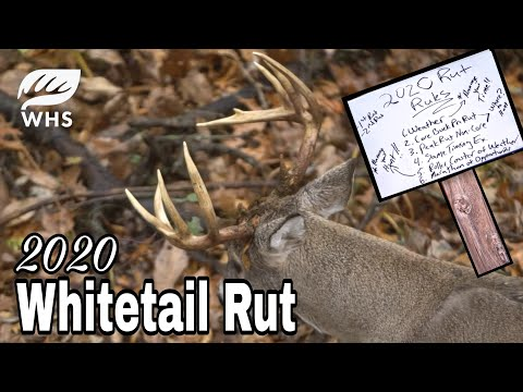 2020 Whitetail Rut Forecast | Rut Rules