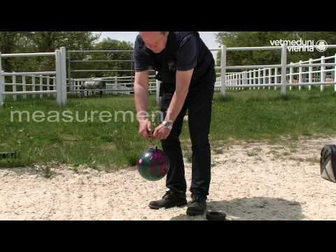 Vetmeduni Vienna: The BALL - New technology for (equine) surface testing