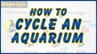How to Cycle a Saltwater Tank: Tips To Help You Succeed with Your New Aquarium