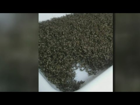 26,000 Mosquitoes Caught In Single Trap Overnight In Hernando County