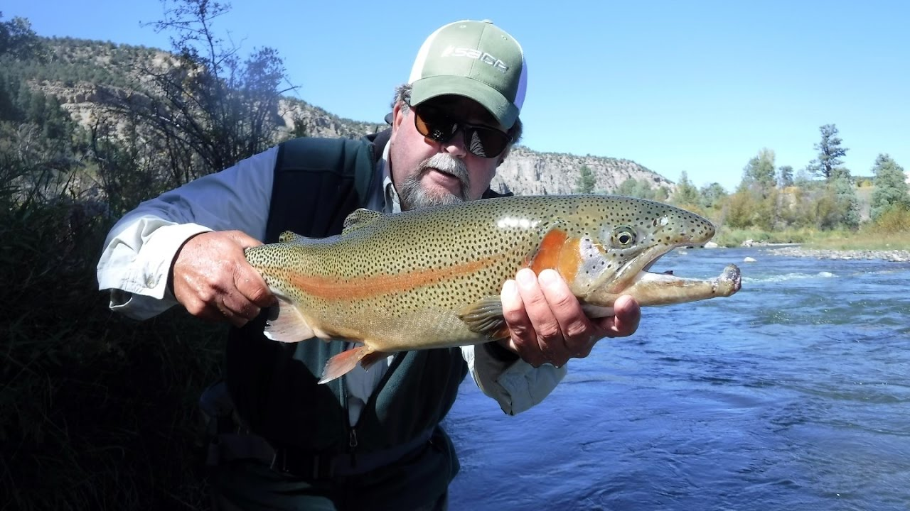 Fly fishing pah co chu puk state park western colorado for Kentucky out of state fishing license