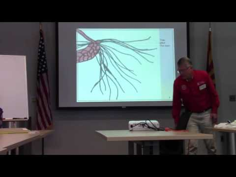 Master Gardener Course: Eight Basic Rules of Botany