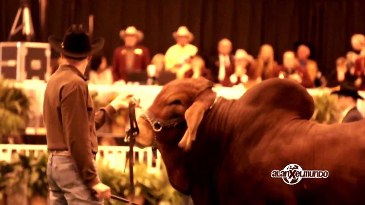 0bb6ab401 El rodeo más grande del mundo - HOUSTON AXM - YouTube