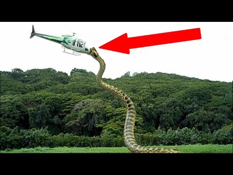 Most TERRIFYING Extinct Creatures Ever!