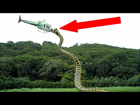 Thumbnail: Most TERRIFYING Extinct Creatures Ever!