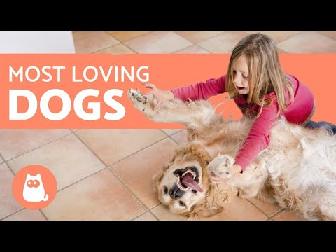 Pet Corner - 10 Most AFFECTIONATE Dog Breeds in the World