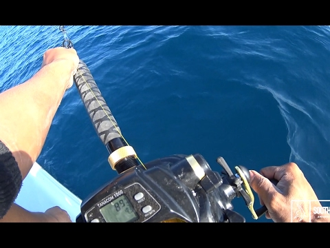 Daiwa Tanacom Electric Reel Vs Huge Tiger Shark