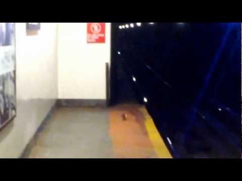 Subway Pizza Rat