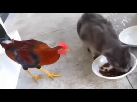 Cats vs other animals   Funny compilation New HD
