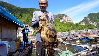6.5 kg. TIGER GROUPER!! Fishing Thai Food + Grape Seaweed in Krabi, Thailand!