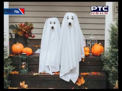 Wet, Windy Weather In Toronto's Forecast On Halloween Environment Canada