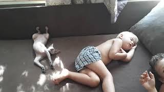 Смешные животные/Кошачий тихий час