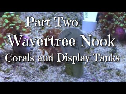 Part Two Wavertree Nook Corals and Display Tanks