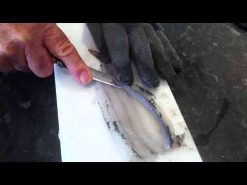 How To Fillet Garfish.