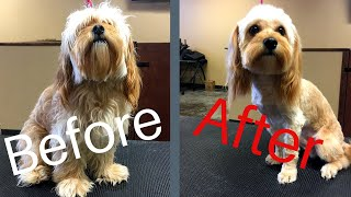 Why I Don't Talk To Some Dogs! | Hard Dog To Groom