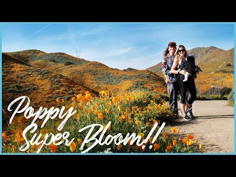 California super bloom 2019 vlog - Lake Elsinore poppy fields - Fuji X-h1