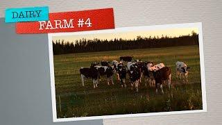 Работа на молочной ферме Финляндии.Набираем и развозим гранулы на поле . #4