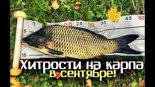 Секреты и хитрости опытных рыбаков на карпа в сентябре!