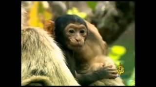 فيلم وثائقي عن حياة القرود البرية