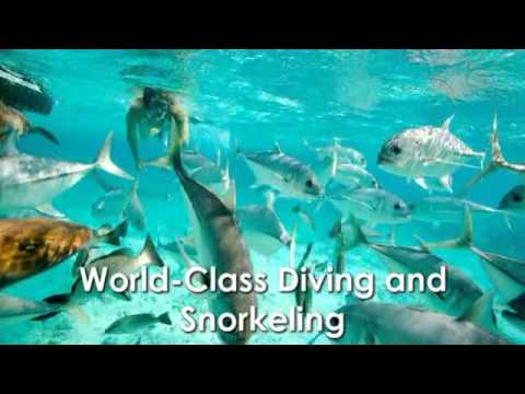 Wonderful Flora, Fauna & Wildlife in Ambergris Caye Belize City 5-21-2014 Belize