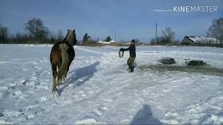 Продажа лошадей 21.03.19