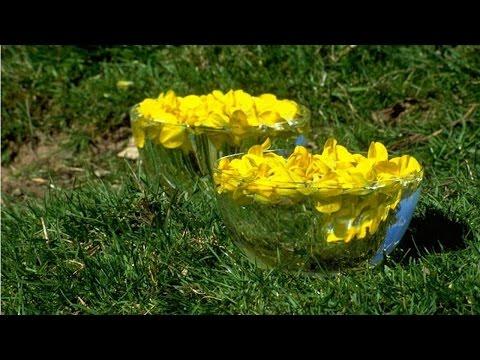 Curso de Florais - Como Preparar a Essência Mãe